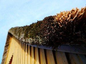 Inboedelverzekering rieten dak